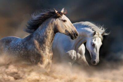 Carta da parati Coppia di cavallo eseguito in polvere al tramonto la luce