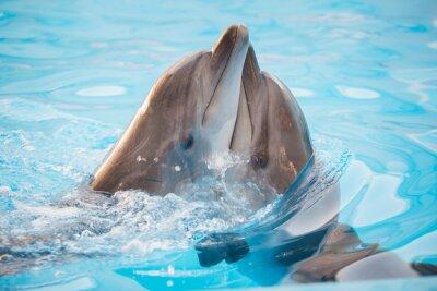 Carta da parati coppia di delfini ballare in acqua