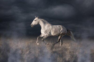 Carta da parati corsa cavallo grigio lusitano