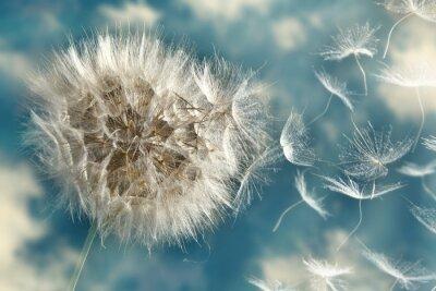 Carta da parati Dandelion Seeds Perdere nel vento