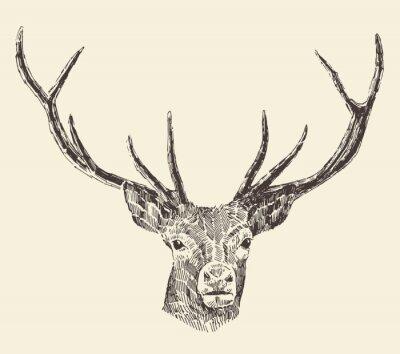 Carta da parati Deer Head Illustrazione Vintage, disegnati a mano, vettore