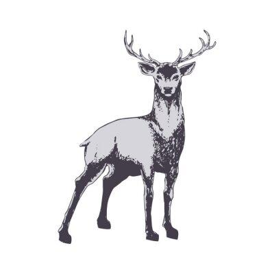 Carta da parati Deer isolated on white