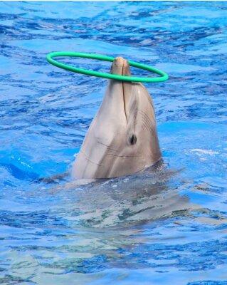 Carta da parati delfino