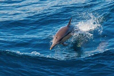 Carta da parati Delfino che salta fuori dall'acqua