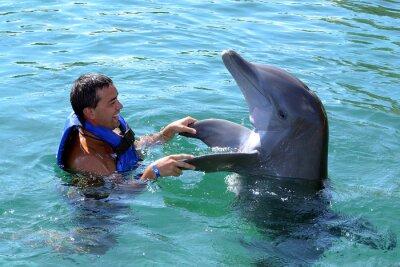 Carta da parati delfino nuotare con te