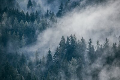 Carta da parati Dense morning fog in alpine landscape with fir trees and mountains.