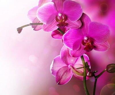 Carta da parati Disegno del bordo del fiore dell'orchidea