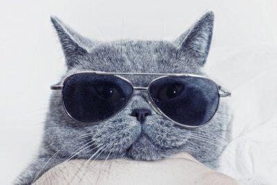 Carta da parati Divertente muso di gatto grigio in occhiali da sole