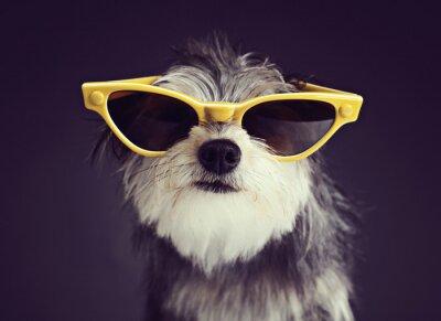 Carta da parati Dog in Glasses 2