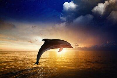 Carta da parati Dolphin salto