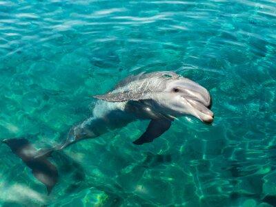 Carta da parati Dolphin sorride come Gioconda
