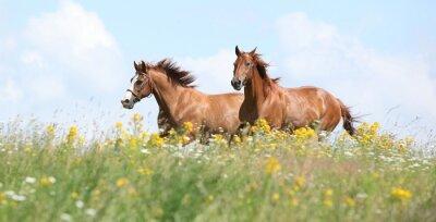 Carta da parati Due cavalli di castagni in esecuzione insieme
