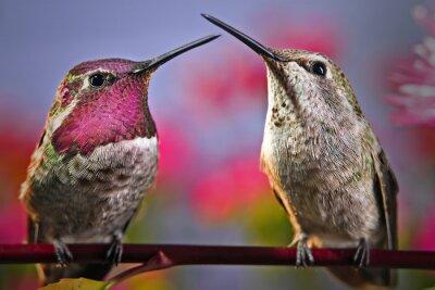 Carta da parati Due colibrì stanno uno accanto all'altro su un ramoscello con fiori in background.