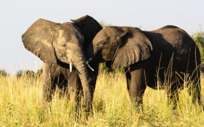 Carta da parati due elefanti affettuosi
