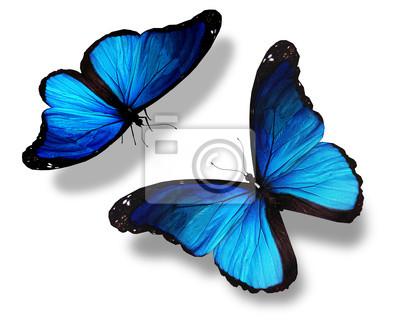 Due Farfalle Blu Isolato Su Sfondo Bianco Il Concetto Di M Carta