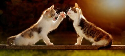Carta da parati Due giovani gatti che giocano su una tavola di legno contro la luce
