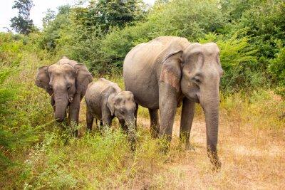 Carta da parati elefante