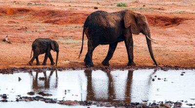Carta da parati Elefante nel Parco Nazionale Tsavo Est