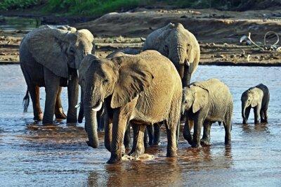 Carta da parati Elefante nella savana