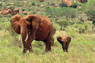 Carta da parati Elefanti