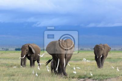 Carta da parati Elefanti africani / Kenia