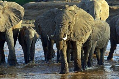 Carta da parati Elefanti africani nella savana