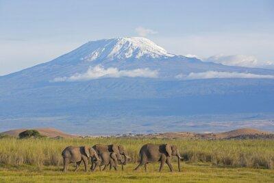 Carta da parati Elefanti con Kilimanjaro