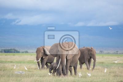 Carta da parati elefanti in Amboseli / famiglia