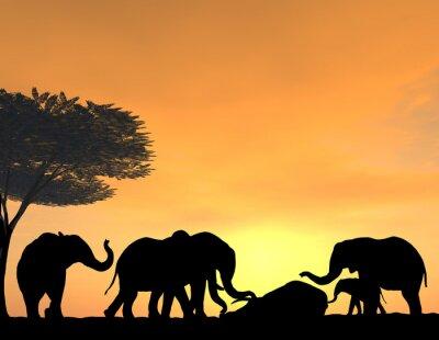 Carta da parati Elefanti Morn loro Morto al tramonto, una scena molto tenera.