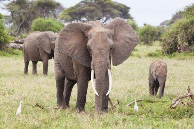 Carta da parati Elephant Family in Kenya