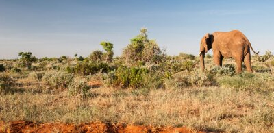 Carta da parati Elephant in Tsavo National Park East, Kenya