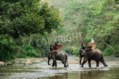 Carta da parati Elephant Trekking nella giungla nel nord della Thailandia