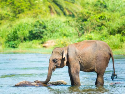 Carta da parati Elephatnt