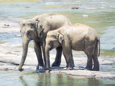 Carta da parati Elephatnts
