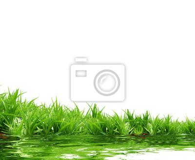 Carta da parati erba