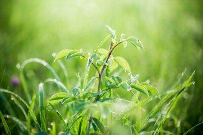 Carta da parati Erba fresca verde con gocce d'acqua sullo sfondo di fasci di luce solare. Focalizzazione morbida