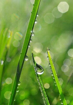 Carta da parati Erba fresca verde con gocce di rugiada del primo piano. Nature Background