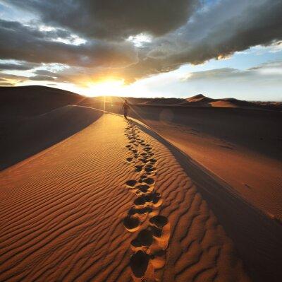 Carta da parati Escursione nel deserto