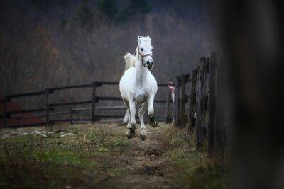 Carta da parati Esecuzione di cavallo bianco