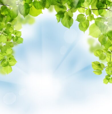 Carta da parati Estate foglie su sfondo floreale verde