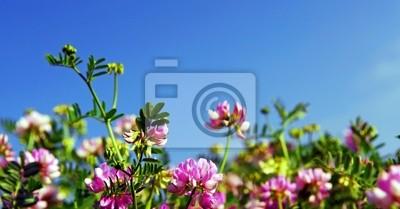 Carta Da Parati Fiori Rosa : Estate prato fiorito con sfondo fiori rosa carta da parati u2022 carte