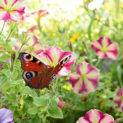 Carta da parati farfalla 186