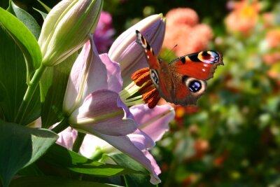 Carta da parati farfalla 188