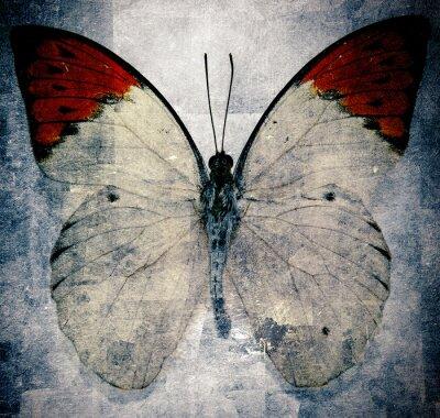 Carta da parati farfalla
