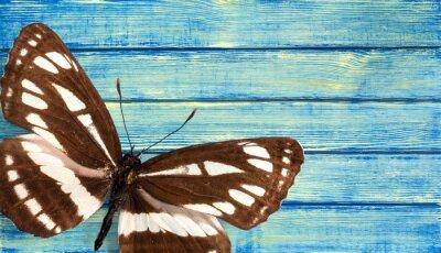 Carta da parati Farfalla.