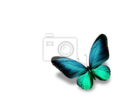 Farfalla Blu Isolato Su Sfondo Bianco Carta Da Parati Carte Da