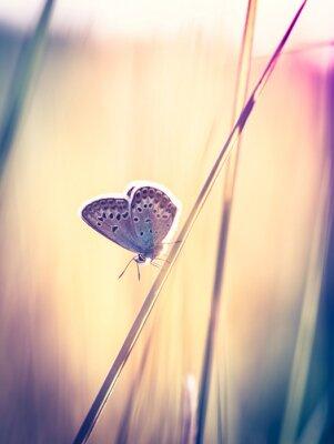 Carta da parati Farfalla blu sul prato