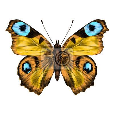 Farfalla con le ali aperte immagine a colori vista - Immagine di terra a colori ...