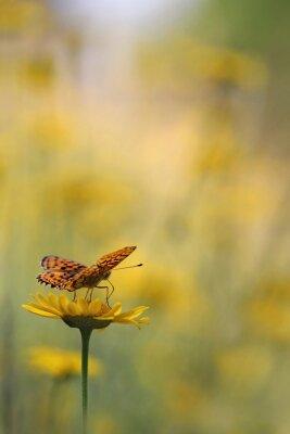 Carta da parati Farfalla in giardino
