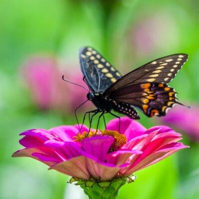 Carta da parati Farfalla su un fiore